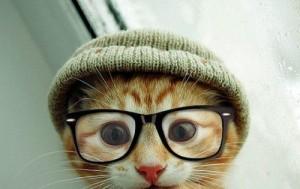 prillidega kass